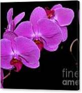 Green Field Sweetheart Orchid No 2 Canvas Print