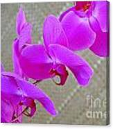 Green Field Sweetheart Orchid No 3 Canvas Print