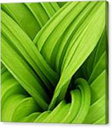 Green Folds Canvas Print