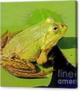 Green Frog 2 Canvas Print