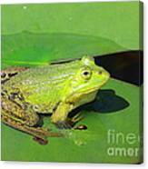 Green Frog Canvas Print