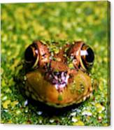 Green Frog Hiding Canvas Print