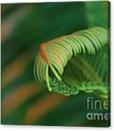 Green Frond  Abstract Canvas Print