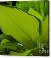 Green Giants Canvas Print