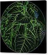 Green Glow Canvas Print