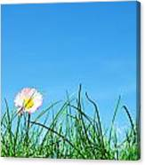Green Grass And A Flower Canvas Print