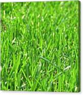 Green Grass Canvas Print