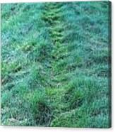 Green Grass Pathway. Canvas Print