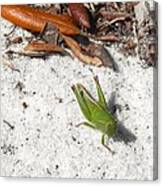 Green Grasshopper Canvas Print