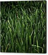 Green Green Grass ... Canvas Print