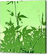 Green Green Haiku Canvas Print