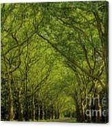 Green Green World Canvas Print