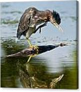 Green Heron Pictures 488 Canvas Print