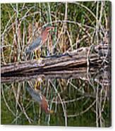 Green Heron Reflections Squared Canvas Print