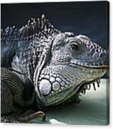 Green Iguana 1 Canvas Print