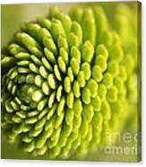 Green Inifinity Canvas Print