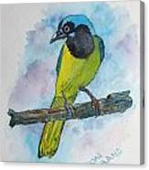 Green Jay Bird Texas Canvas Print