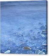 Green Kelp On The Rock Canvas Print