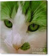 Green Kitten Canvas Print