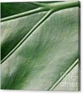 Green Leaf Up Close 2 Canvas Print