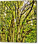 Green Leafy Trees Canvas Print