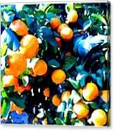 Green Leaves And Mature Oranges On The Tree Canvas Print