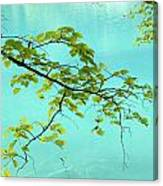 Green Leaves Over Blue Water Canvas Print