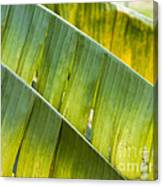 Green Leaves Series 14 Canvas Print