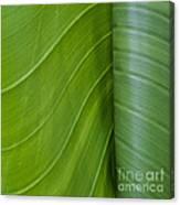 Green Leaves Series  6 Canvas Print