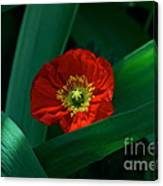 Green Loves Red Loves Green Canvas Print