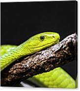 Green Mamba - Mamba Verte - Grüne Mamba Canvas Print