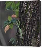 Green Mantis Canvas Print