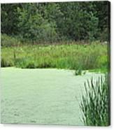 Green Moss Canvas Print