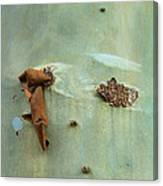 Green Outer Bark Canvas Print