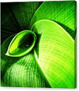 Green Paradise - Leaves By Sharon Cummings Canvas Print