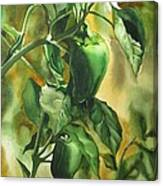 Green Peppers From Our Garden Canvas Print
