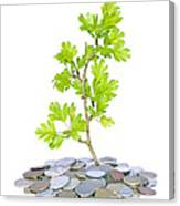 Green Plant And Money  Canvas Print