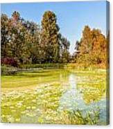 Green Pond And Tree Canvas Print