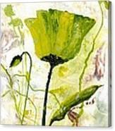 Green Poppy 003 Canvas Print
