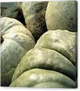 Green Pumpkins Canvas Print