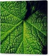 Green Ribbons Of Life Canvas Print