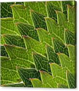 Green Scales Of A Dragon Canvas Print