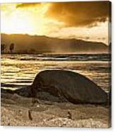 Green Sea Turtle At Sunset V2 Canvas Print