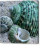 Green Seashells Canvas Print