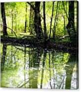 Green Shadows Canvas Print