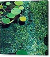 Green Shimmering Pond Canvas Print