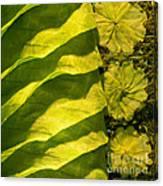 Green Silk 03 Canvas Print