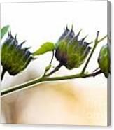 Green Spiky Wild Flowers Canvas Print