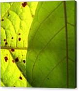 Green Sunlight Canvas Print