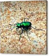 Green Tiger Beetle Canvas Print